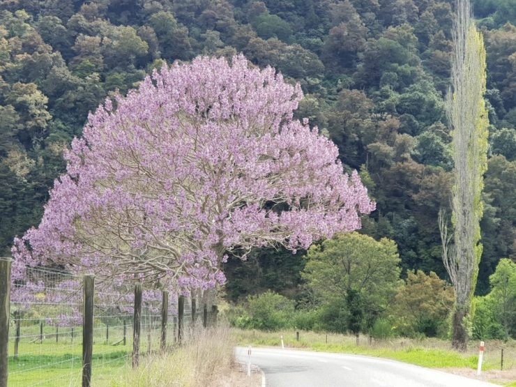 The Great Taste Trail Motueka valley in Spring
